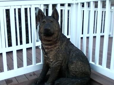 Nice german shephard displayed at all creatures great and for Denville fish market